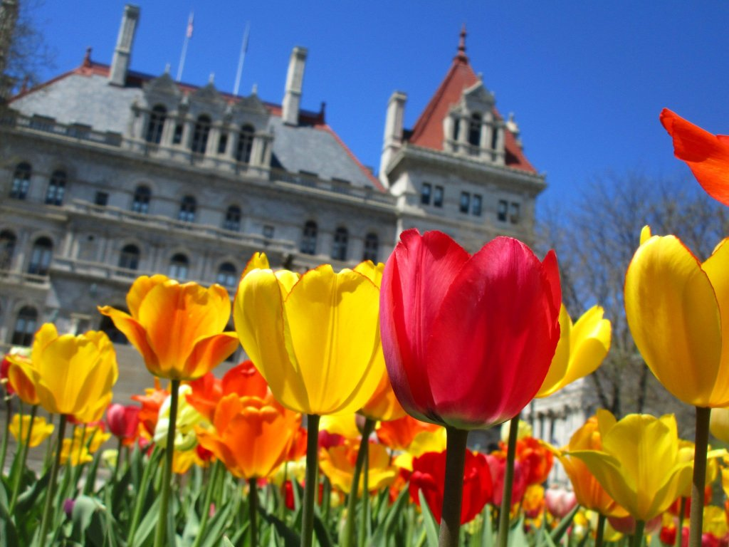 Photo: Tulips Out Front