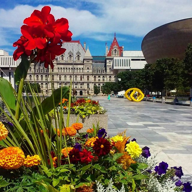 Photo: Summer in Albany