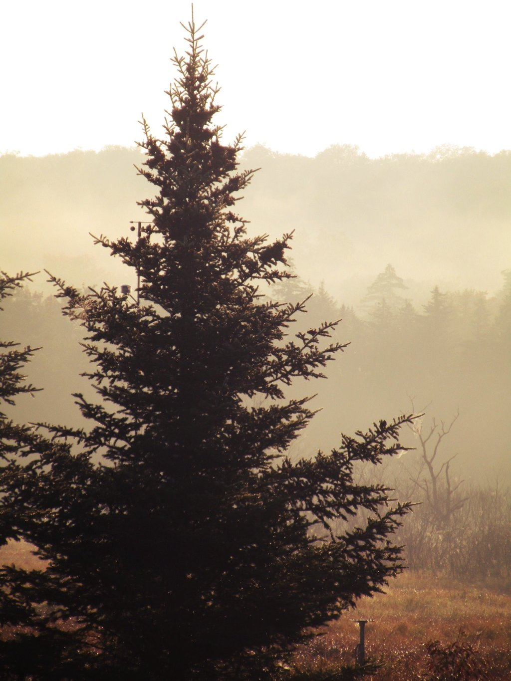 Photo: Morning At Powley Place