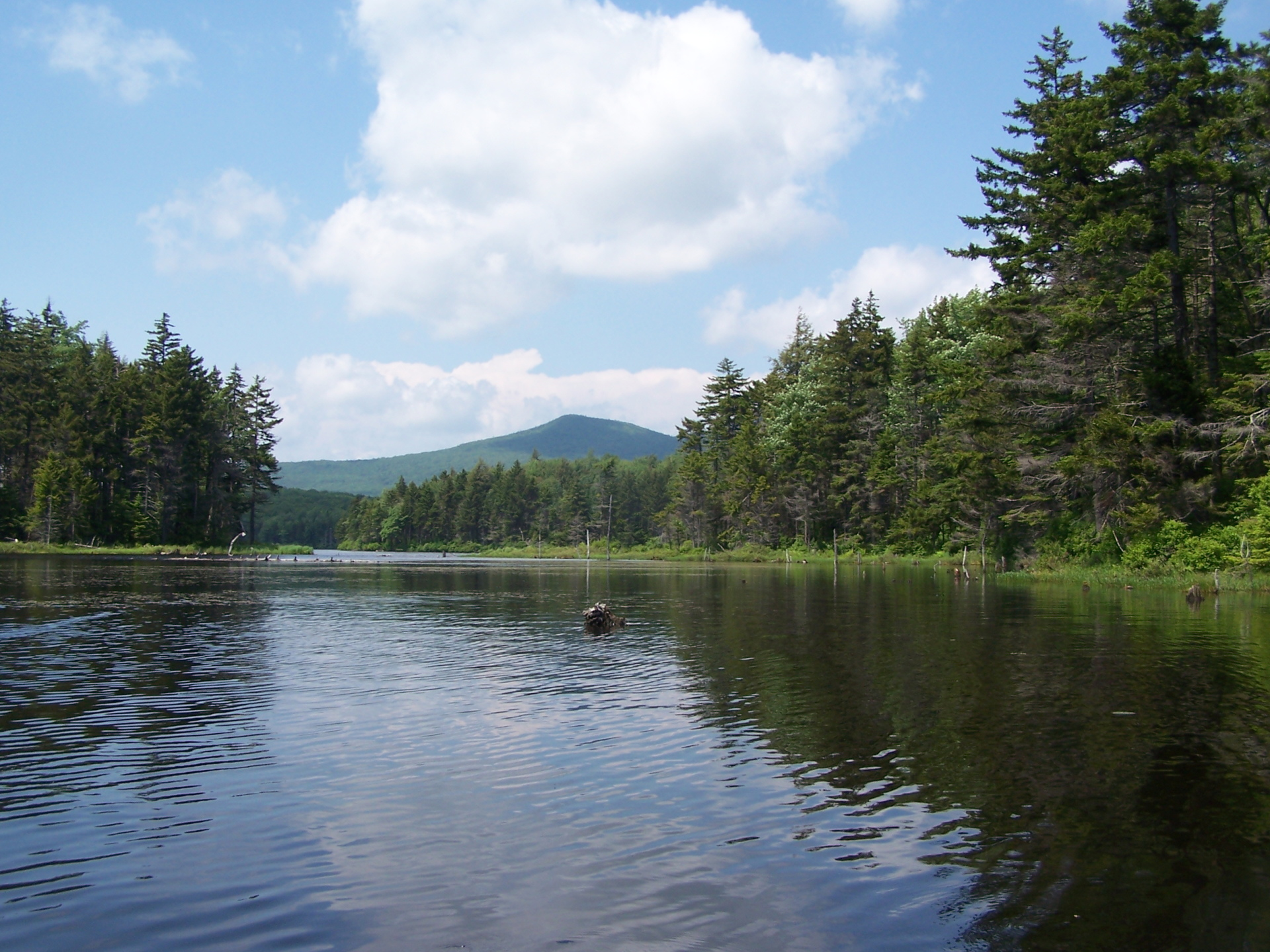 Photo marshy end of grout pond andy for Fishing license vt